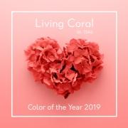 živý koral